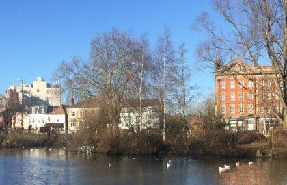 Duckpond in Barnes