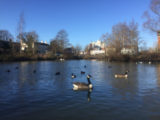 The duckpond in Barnes
